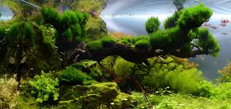 My Scape IAPLC Rank # 70 | AquaScaping World Forum Hamsa Wabikusa Style Aquascaping World Forum Httpwww Nature Aquarium And Aquascaping Wiki 25l Nano Capa 2011 French Aquascapers Results My Scape Iaplc Rank 70 The Passing Of Legend Takashi Amano Magazine With Nicolas Guillermin Surreal Submarine Amuse Aquascape The Month August 2010 Beyond Riccardia Chamedryfolia Question This Is Ada 2009 Susanna Aquascape Garden Bonsai Plants