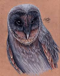 Black Barn Owl By KristynJanelle On DeviantArt Black Barn Owl Oc Eclipse By Pkhound On Deviantart Closeup Of A Stock Photo 513118776 Istock Birds Of The World Owls This Galapagos Barn Owl Lives With Its Mate A Shelf In The Started Black Paper Today Ref Paul Isolated On Night Stock Photo 296043887 Shutterstock Stu232 Flickr Bird 6961704 Moonlit Buttercups Moth Necklace Background Image 57132270 Sd Falconry Mod Eye Moody