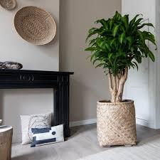 pflanzkübel aus bambus und zement