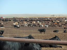 Cattle Feedlot: Behind The Scenes | Precision Nutrition Farm Cow In Corral And Barn Hd Stock Video Footage Videoblocks Cattle Archives Ritchie Industries Inc Cattle Cooler Room Dream Pinterest Barn Room Category Eden Shale 245 Best Our Images On Livestock The Midland Agrarian Kerry Updating Old Barns To Fit Todays Farming Manure Management Temperature Impacts Gas Ccentrations Why Raise Dairy Cows Or Goats Sustainable Cow Milking Parlor Set Up Goat Dairy Ideas Parlour Vaframe Rancher Profile Ryan Bros Cattle Kiss My Tractor
