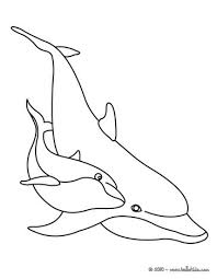 Pacific White Sided Dolphin Dolphins Online Coloring