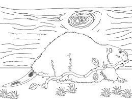 Beavers Coloring Pages