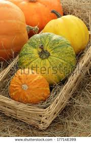 Varieties Of Pumpkins by Different Types Of Pumpkins Stock Images Royalty Free Images