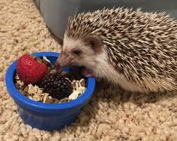 Porcupine Eats Pumpkin by Amelie Mia Desmond And Miles August 2016