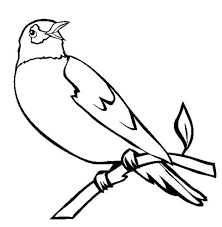Birds Robin Bird Singing In The Morning Coloring Page
