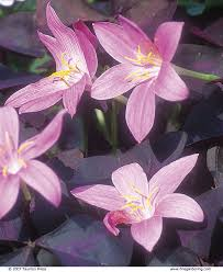 bulbs for summer and fall gardening