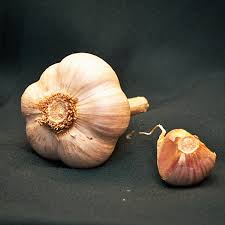 bj gourmet garlic farm