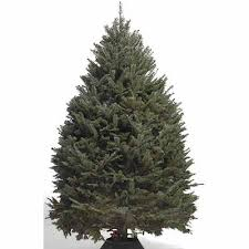 Fraser Fir Christmas Trees Delivered by Types Of Real Christmas Trees The Home Depot