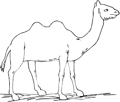 Free Printable Camel Coloring Pages For Kids And