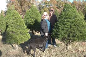 Leyland Cypress Christmas Tree Farm by About Janda Bend Janda Bend Christmas Trees
