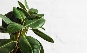 pflanzen im schlafzimmer die 5 besten lufterfrischer für