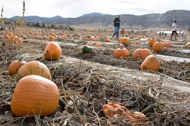 Pumpkin Patch Denver Botanic Gardens by Your Guide To Fall Fun Where To Find Corn Mazes Pumpkin Patches