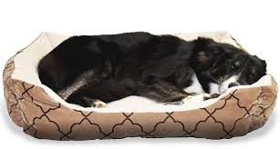 Top Rated Orthopedic Dog Beds by Top 5 Best Dog Beds For All Sizes Reviews U0026 Buying Guide Paw Castle