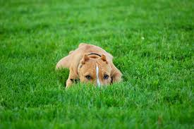 Non Shedding Dogs Large by Dog Frequent What Are Some Common Causes