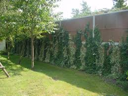 Noise Barrier With Cocofibre - Kokosystems Int. Caught Attempting To Break The Sound Barrier Zoomies Best 25 Backyard Privacy Ideas On Pinterest Privacy Trees Sound Barriers Dark Bedroom Colors 4 Two Story Outdoor Goods Beautiful Hedges For Diy Barrier Fence Soundproof Residential Polysorptc2a2 Image Result Gabion And Wood Fence Mixed Aqfa10ext Exterior Absorber Blanket 100 Landscaping How To Customize Your Areas With Screens Uk Curtains At Riviera We
