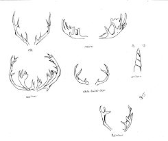 Full Size Of Coloring Pagebreathtaking How To Draw Antlers Lsb8rg0 Page Large