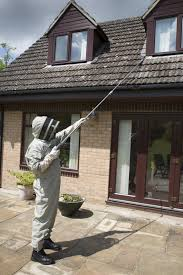 wasp nest removal oxfordshire same day or next day wasp nest