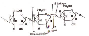 Chair Conformations Of Menthol by Cbse Class 12 Chemistry Notes Biomolecules Aglasem Schools