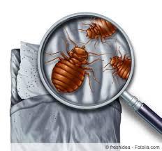 maden im bett was tun gegen würmer larven gartenlexikon de