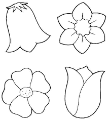 Flower Coloring Page Preschool Images Of Plants Pages For