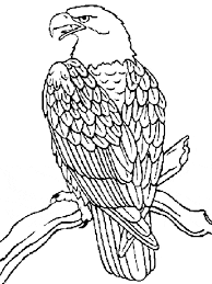 Free Eagle Coloring Page