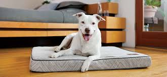 Pottery Barn Dog Bed by Biting Off The High End Of The Market Inc Com