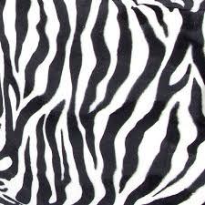 Zebra Wallpaper Zebra Print Wallpaper Zebra Wallpaper Iphone