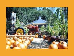 Half Moon Bay Pumpkin Patch Ca by The Bay Area U0027s Best Pumpkin Patches Cbs San Francisco