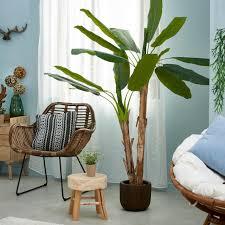 banana bananenbaum grün h 180 cm ø 20 cm