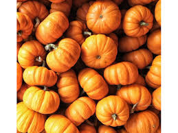 Maryland Pumpkin Patches Near Baltimore by 5 Places To Grab Pumpkins In Anne Arundel Annapolis Md Patch