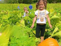 Local Pumpkin Farms In Nj by 17 Pick Your Own Pumpkin Locations In Nj Hillsborough Nj Patch