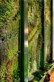 grüne wand raffinierter blickfang für die wohnung