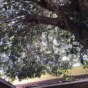 El Patio De Rialto Closed by Patio West Deli 41 Photos U0026 123 Reviews Delis 108 S