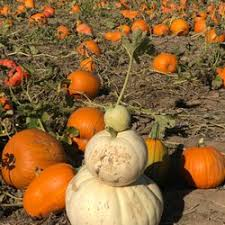 Pumpkin Patch Littleton Co by Anderson Farms 144 Photos U0026 92 Reviews Go Karts 6728 County