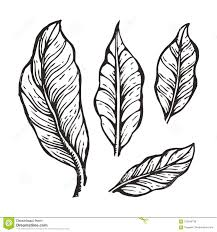 Download Coffee Tree Leaves Sketch Vector Illustration Stock