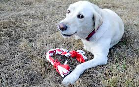 diy how to make a t shirt dog toy