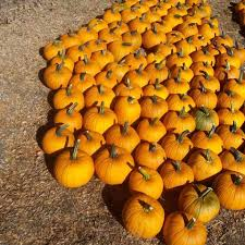 Pumpkin Patch San Fernando Valley 2015 by Finley Farms Home Facebook