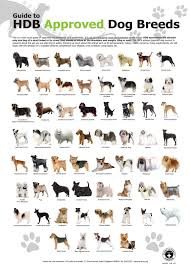 Non Shedding Small Dog Breeds List by Dog Breed Identifier Laura Williams
