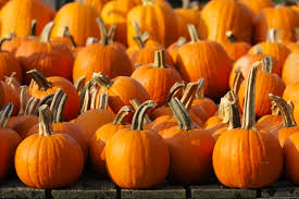 Pumpkin Picking Nj by Fall Fun Mercer County Festivals And Events Real Moms Of Nj