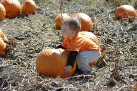 Pumpkin Patches Near Colorado Springs Co by Fall Pumpkin And Harvest Festivals 2017 In Colorado The Denver Ear