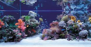 Any Salties Out There? Saltwater Aquascapes | AquaScaping World Forum Is This Aquascape Ok Aquarium Advice Forum Community Reefcleaners Rock Aquascaping Contest Live Rocks In Your Saltwater Post Your Modern Aquascape Reef Central Online There A Science To Live Rock Sanctuary 90 Gallon Build Update 9 Youtube Page 3 The Tank Show Skills 16 How Care What Makes Great Large Custom Living Coral Aquariums Nyc