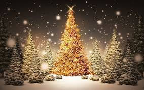 Canaan Fir Good Christmas Tree by Best Christmas Tree Farms In Nj 2015 Guide