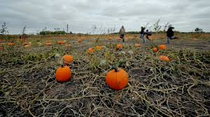 Pumpkin Patch Illinois Chicago by Country Corner Giant Pumpkin Festival Enjoy Illinois