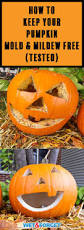 Keep My Pumpkin From Rotting by Ask Wet U0026 Forget See The Best Pumpkin Preservation Trick Ask Wet