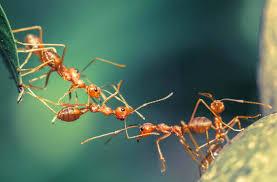 was hilft gegen ameisen 9 wirkungsvolle hausmittel