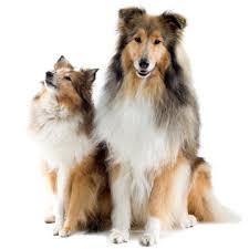Non Shedding Large Dogs by Best Big Dogs For Kids Family Circle
