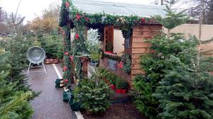 Harrows Artificial Christmas Trees by Real Christmas Trees Delivered Installed And Decorated