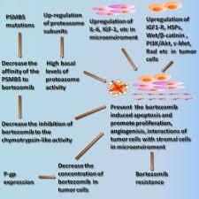 The Histone Deacetylase Inhibitor Belinostat PXD101 Suppresses