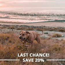 25% Off - Canna Pet Coupons, Promo & Discount Codes - Wethrift.com Best Cbd Oil For Dogs In 2019 Reviews Of The Top Brands And Grateful Dog Treats Canna Pet King Kanine Coupon Code Review Pets Codes Promo Deals On Offerslovecom Hemppetproducts Instagram Photos Videos Cbd Voor Die Diy Book Marketing Buy Cannabis Products Online Mail Order Dispensarygta April 2018 Package Cannapet Advanced Maxcbd 30 Capsules 10ml Liquid V Dog Coupon Finder Beginners Guide To Health Benefits Couponcausecom Purchase Today Your Chance Win A Free Cbdcannabis Hashtag Twitter
