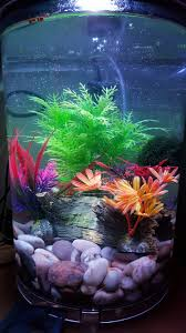 Halloween Hermit Crab Lifespan by Fish Tank Glow Fish And Tank Ideas Pinterest Fish Tanks